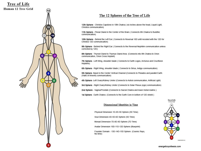 File:12TreeGrid-Body12 jpg - Ascension Glossary