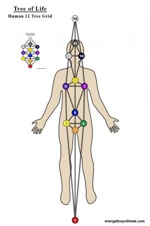 http://ascensionglossary.com/images/thumb/7/75/12TreeGrid-Body2.jpg/300px-12TreeGrid-Body2.jpg