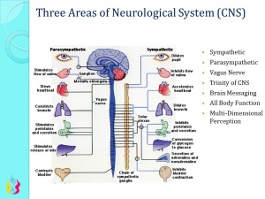 Central Nervous System Ascension Glossary